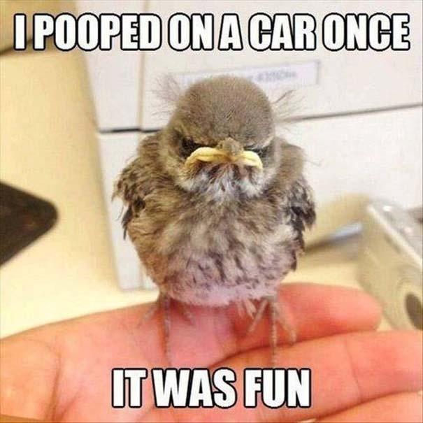 Angry Birds στην κυριολεξία (16)