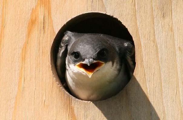 Angry Birds στην κυριολεξία (17)