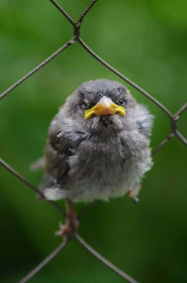 Angry Birds στην κυριολεξία (22)