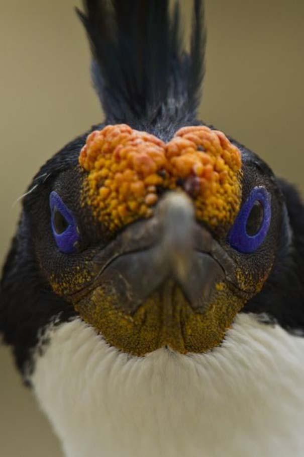 Angry Birds στην κυριολεξία (24)