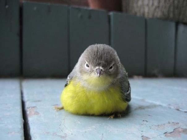 Angry Birds στην κυριολεξία (25)