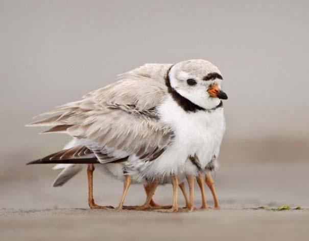 Ασυνήθιστες φωτογραφίες ζώων που χρειάζονται και δεύτερη ματιά (6)