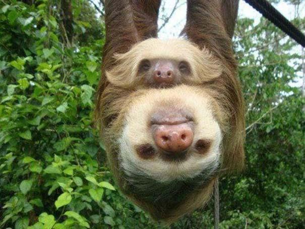 Ασυνήθιστες φωτογραφίες ζώων που χρειάζονται και δεύτερη ματιά (10)