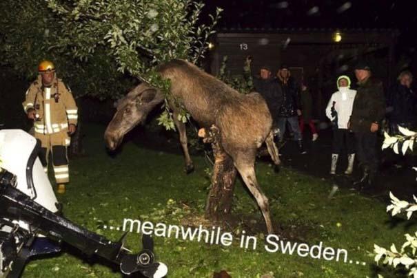 Εν τω μεταξύ, στη Σουηδία... (11)