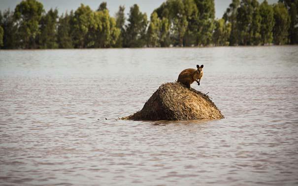 Εκπληκτικές φωτογραφίες που καταγράφουν την οργή της φύσης (23)