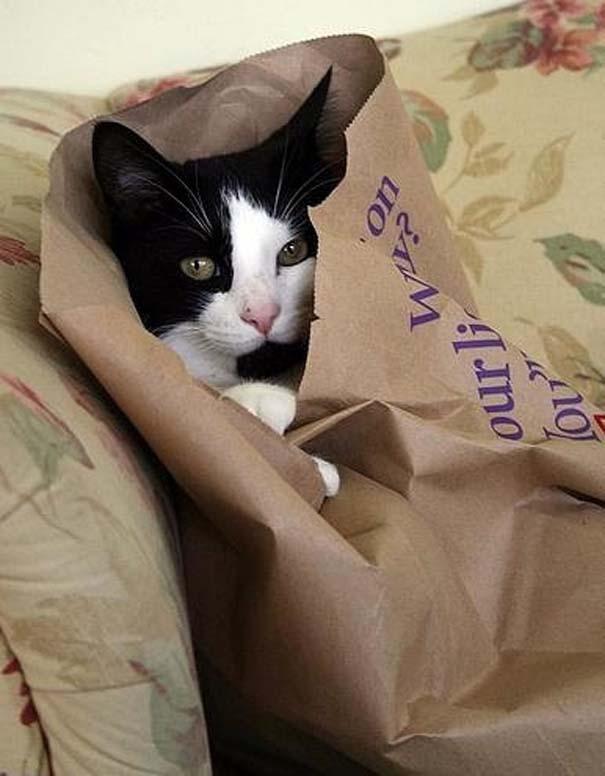 Γάτες που δεν είναι καθόλου καλές στο κρυφτό (3)
