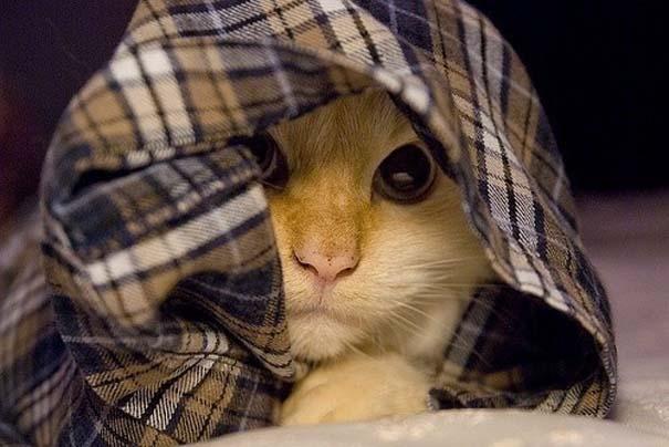 Γάτες που δεν είναι καθόλου καλές στο κρυφτό (4)