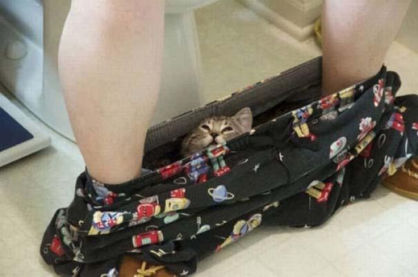 Γάτες που δεν είναι καθόλου καλές στο κρυφτό (7)
