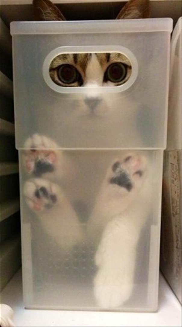 Γάτες που δεν είναι καθόλου καλές στο κρυφτό (9)