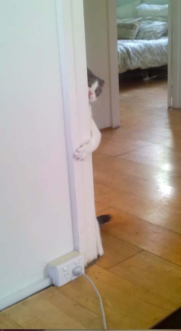 Γάτες που δεν είναι καθόλου καλές στο κρυφτό (10)