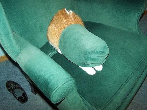Γάτες που δεν είναι καθόλου καλές στο κρυφτό (11)