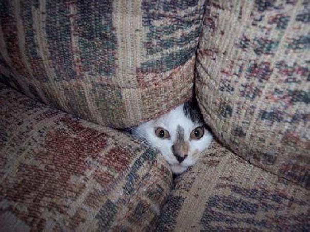 Γάτες που δεν είναι καθόλου καλές στο κρυφτό (12)