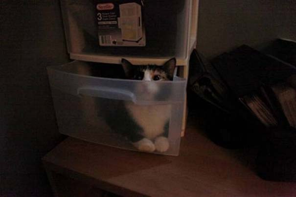 Γάτες που δεν είναι καθόλου καλές στο κρυφτό (16)