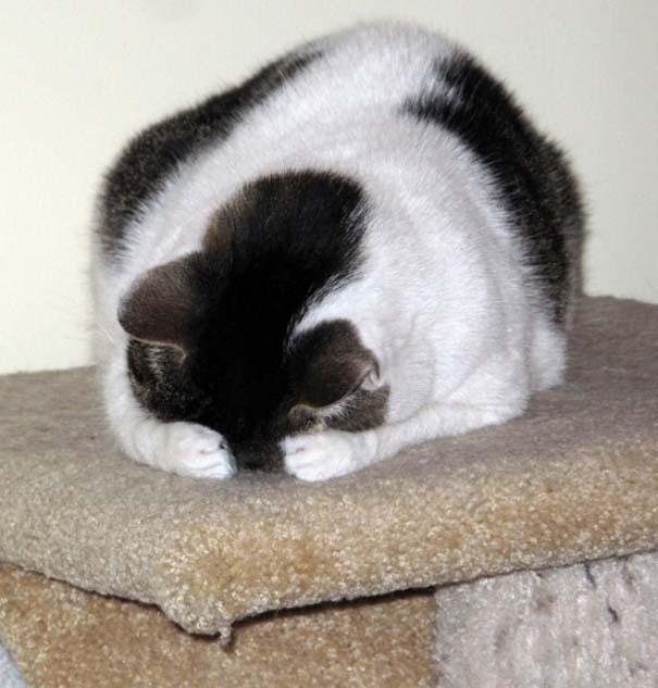 Γάτες που δεν είναι καθόλου καλές στο κρυφτό (17)