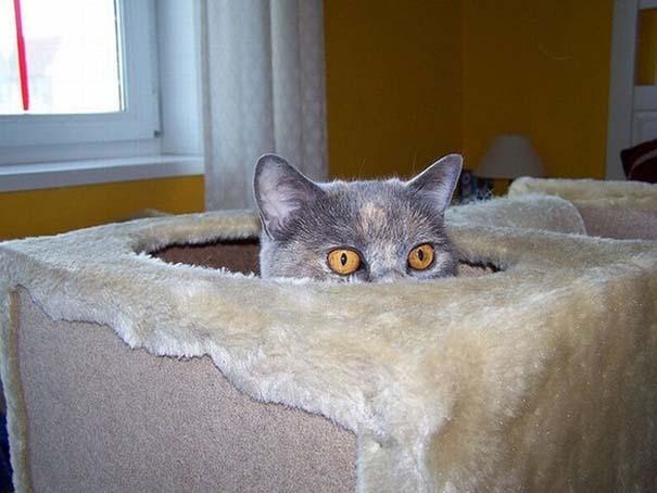 Γάτες που δεν είναι καθόλου καλές στο κρυφτό (18)