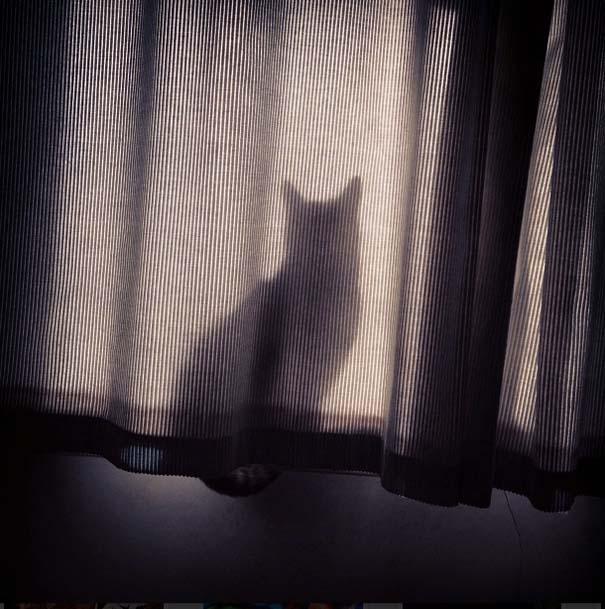 Γάτες που δεν είναι καθόλου καλές στο κρυφτό (19)