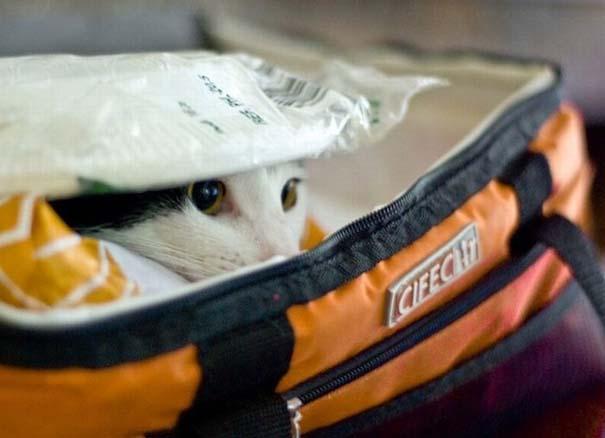 Γάτες που δεν είναι καθόλου καλές στο κρυφτό (20)