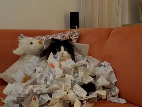 Γάτες που δεν είναι καθόλου καλές στο κρυφτό (21)