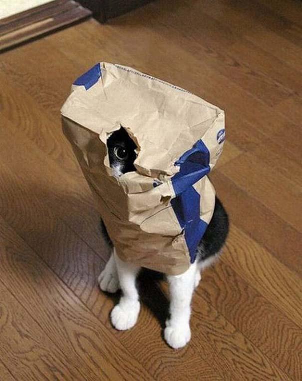 Γάτες που δεν είναι καθόλου καλές στο κρυφτό (23)