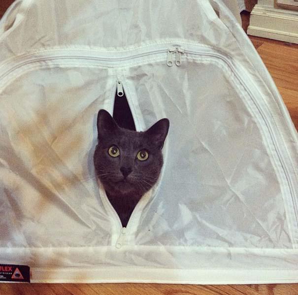 Γάτες που δεν είναι καθόλου καλές στο κρυφτό (25)