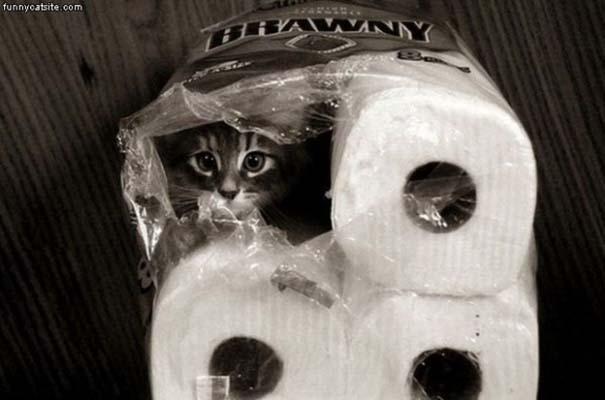 Γάτες που δεν είναι καθόλου καλές στο κρυφτό (26)