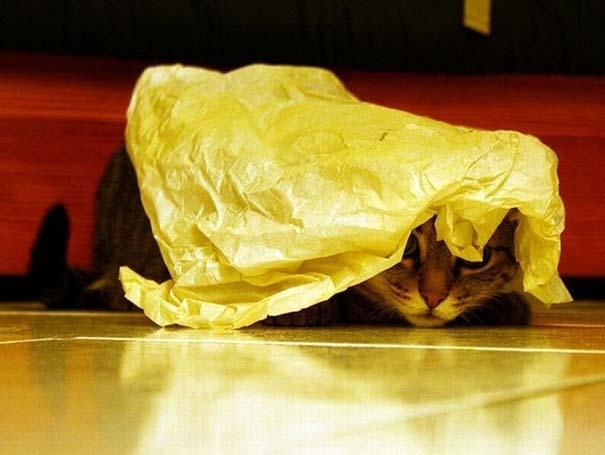 Γάτες που δεν είναι καθόλου καλές στο κρυφτό (27)