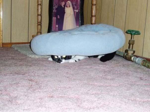 Γάτες που δεν είναι καθόλου καλές στο κρυφτό (29)