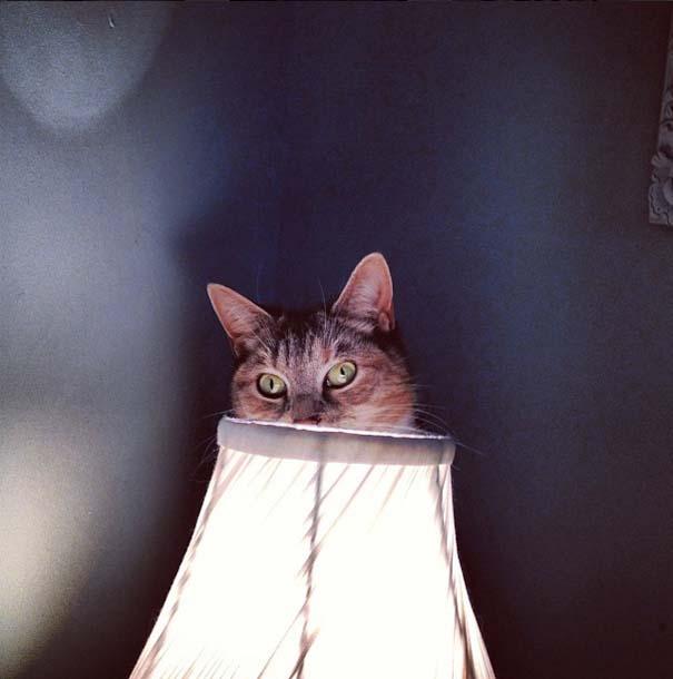 Γάτες που δεν είναι καθόλου καλές στο κρυφτό (31)