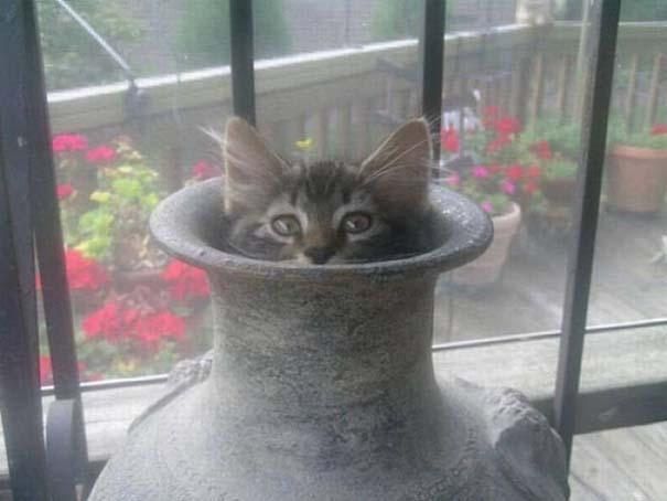 Γάτες που δεν είναι καθόλου καλές στο κρυφτό (33)