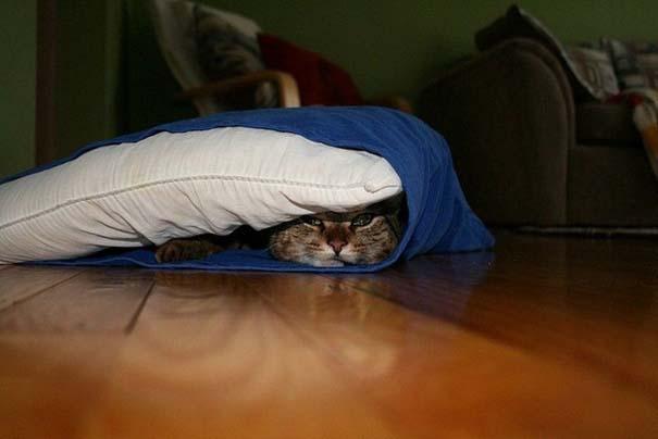 Γάτες που δεν είναι καθόλου καλές στο κρυφτό (36)