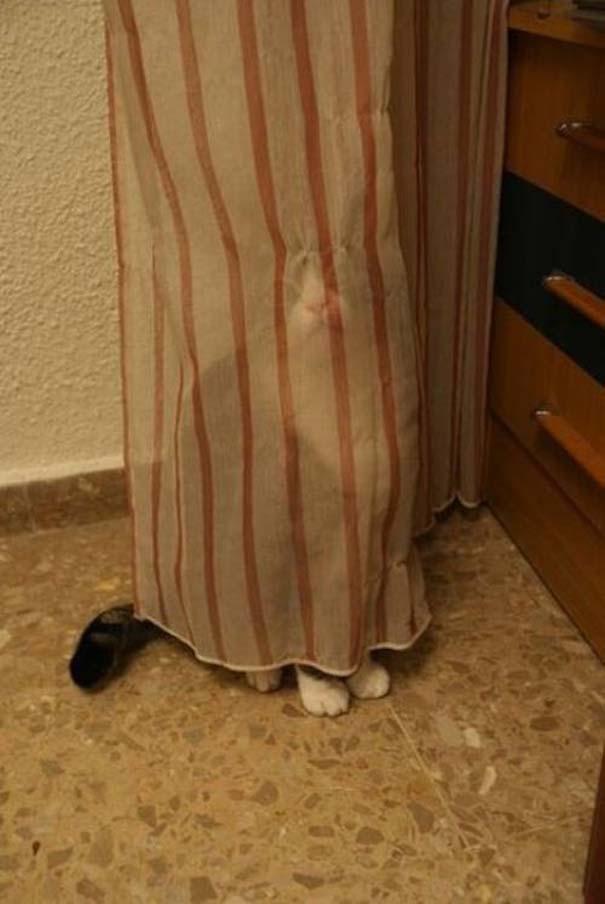 Γάτες που δεν είναι καθόλου καλές στο κρυφτό (40)