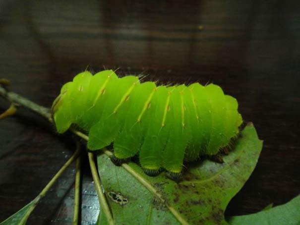 Μια από τις πιο εντυπωσιακές μεταμορφώσεις στη φύση (3)