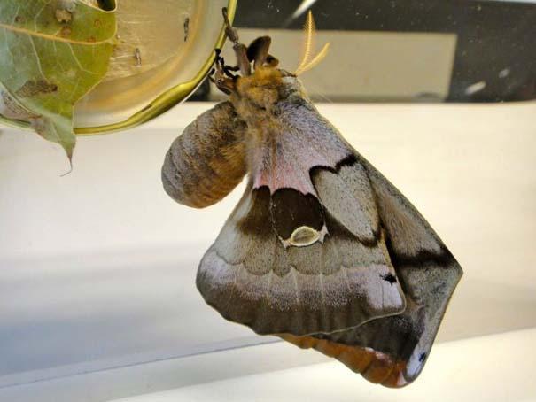 Μια από τις πιο εντυπωσιακές μεταμορφώσεις στη φύση (15)