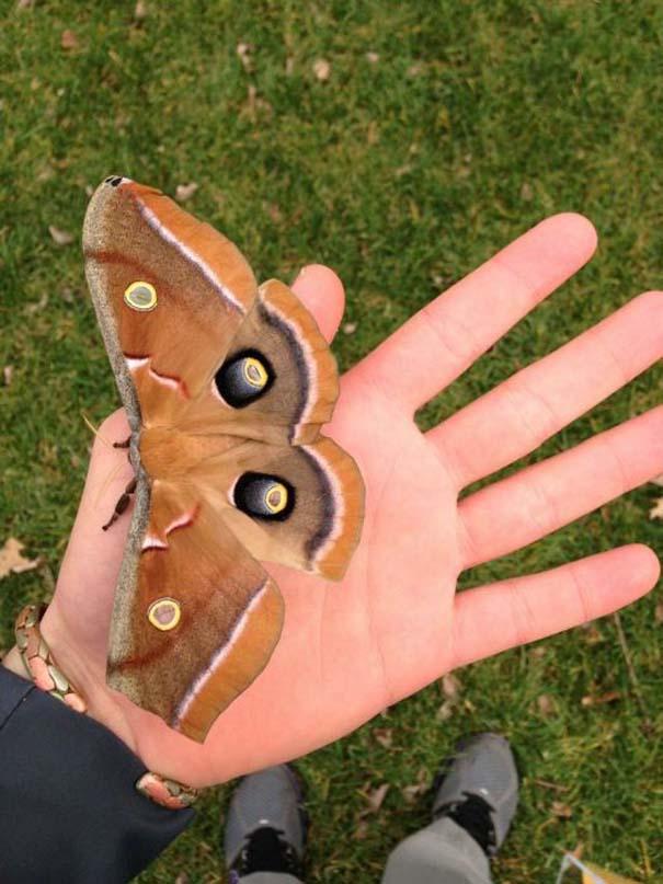 Μια από τις πιο εντυπωσιακές μεταμορφώσεις στη φύση (19)