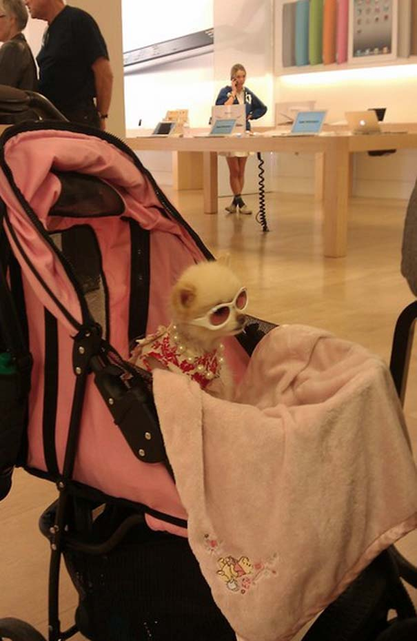 Παράξενα κι αστεία στα Apple Stores (14)