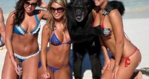 45 παράξενα και τραγελαφικά σκηνικά στην παραλία