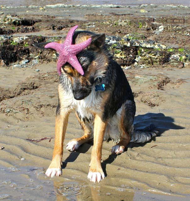Παράξενα και τραγελαφικά στην παραλία (20)
