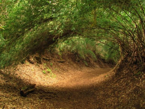 Το μάτι του δάσους   Φωτογραφία της ημέρας