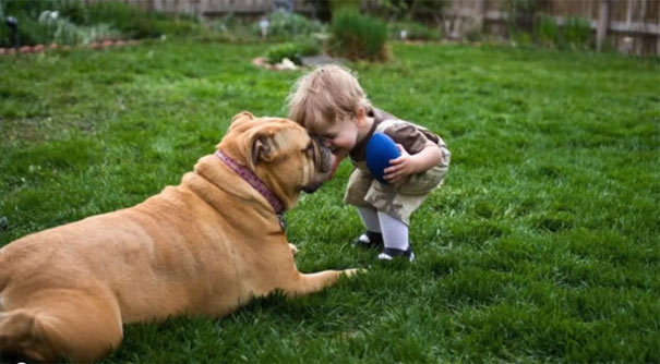 Σημαντικά πράγματα που μας μαθαίνουν οι σκύλοι