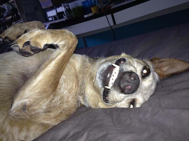Σκύλοι που ανυπομονούν να ξυπνήσεις (1)