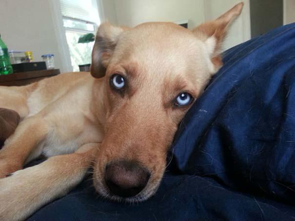 Σκύλοι που ανυπομονούν να ξυπνήσεις (4)
