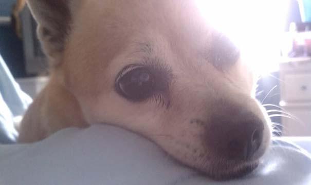 Σκύλοι που ανυπομονούν να ξυπνήσεις (5)