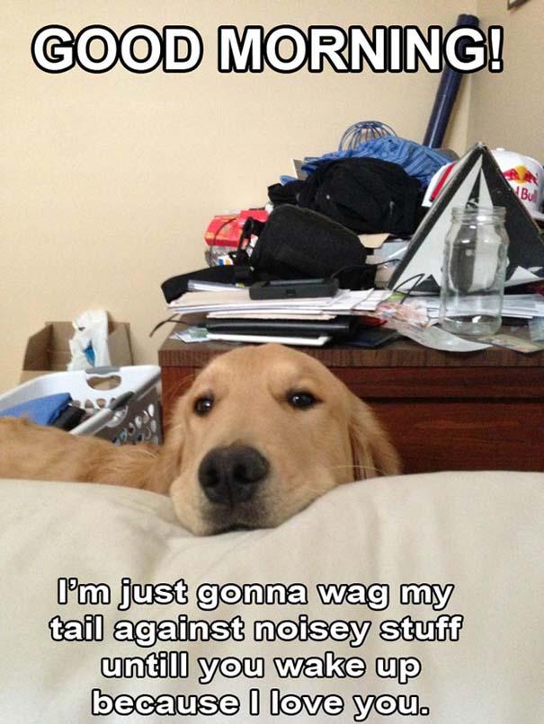 Σκύλοι που ανυπομονούν να ξυπνήσεις (8)