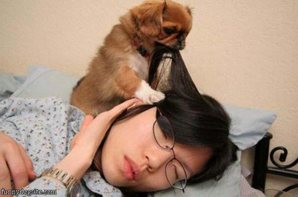 Σκύλοι που ανυπομονούν να ξυπνήσεις (9)
