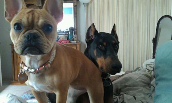 Σκύλοι που ανυπομονούν να ξυπνήσεις (11)