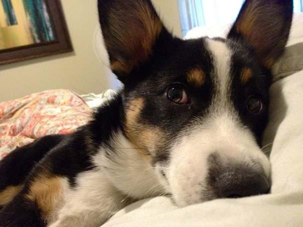 Σκύλοι που ανυπομονούν να ξυπνήσεις (13)