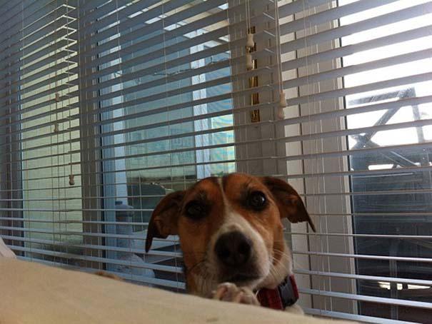 Σκύλοι που ανυπομονούν να ξυπνήσεις (15)