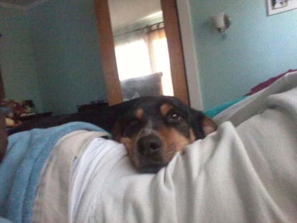 Σκύλοι που ανυπομονούν να ξυπνήσεις (16)