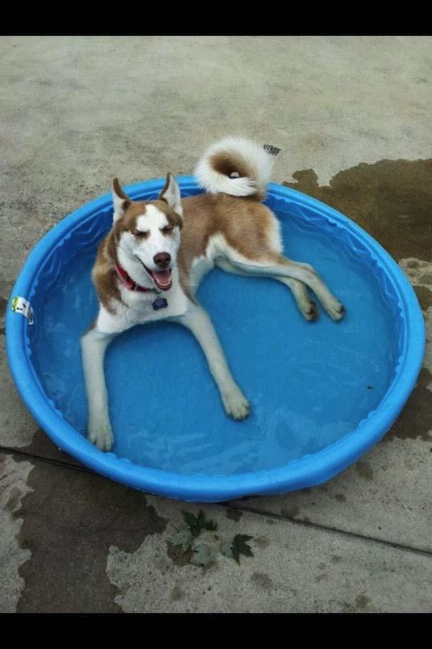 Σκύλοι που απολαμβάνουν το δικό τους Pool Party (2)