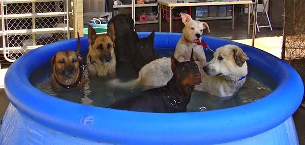 Σκύλοι που απολαμβάνουν το δικό τους Pool Party (4)